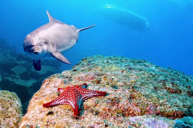 Dolphijn and seastar in Galapagos Islands