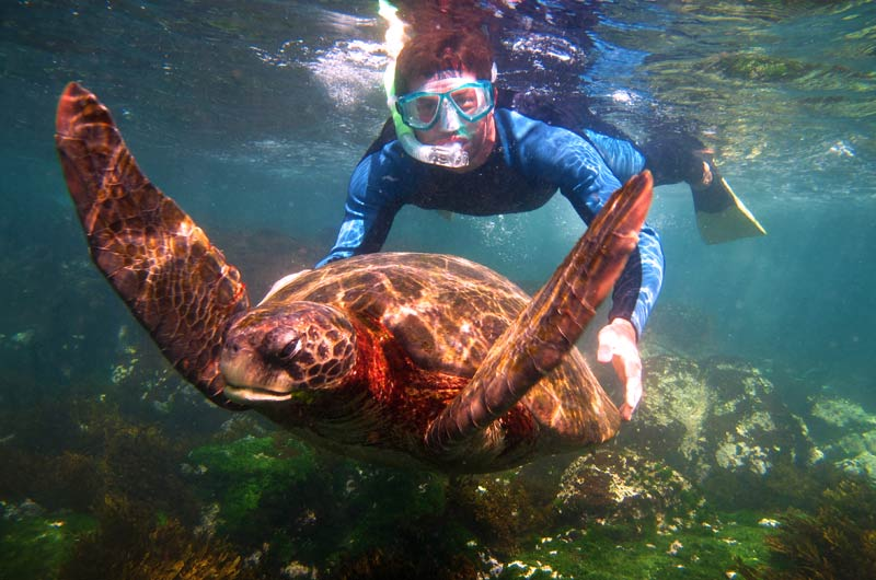 Snorkeling with a sea turtle in Galapagos 2019