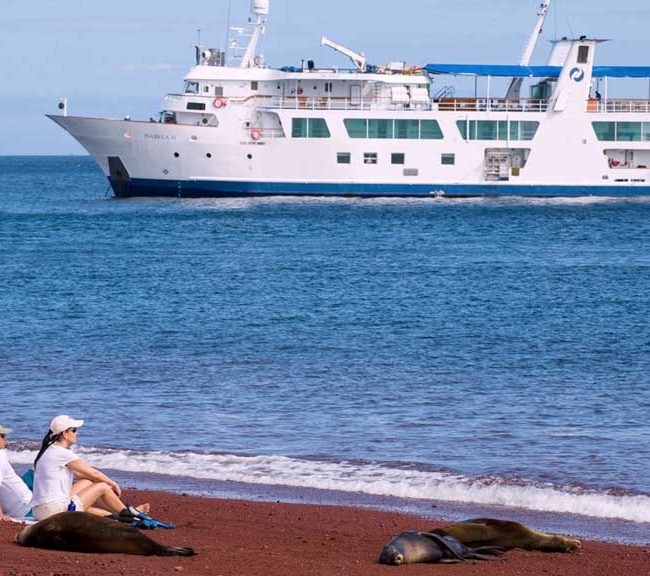 enjoying the beach with sea lions in the isabela ii cruise