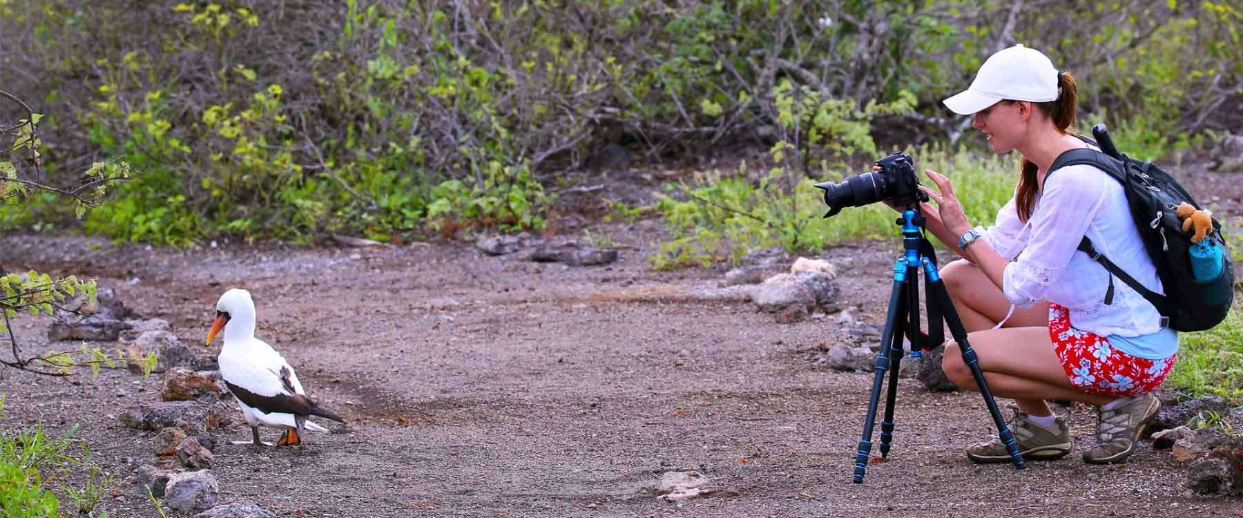 taking picture of albatros in galapagos 2020