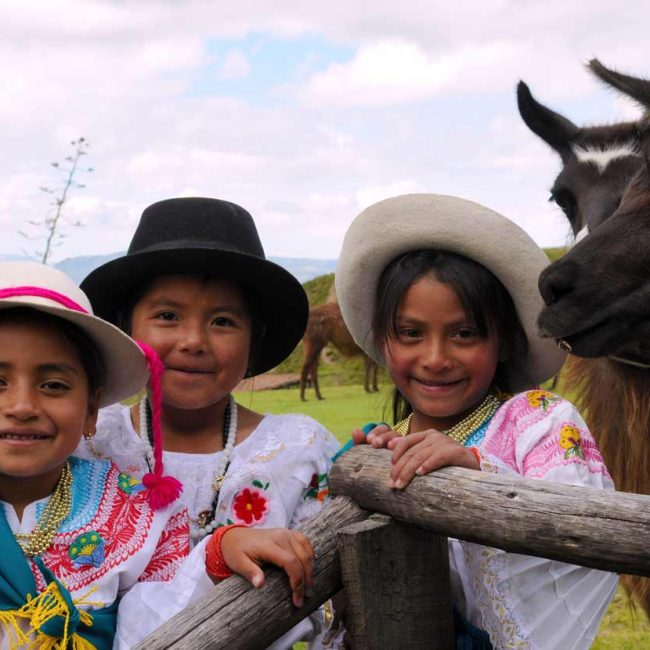 ecuadorian indigenous children with llamas