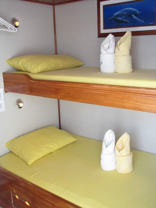 Aida maria cabin tourist class galapagos